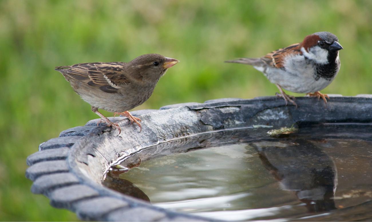 गर्मी के मौसम में करें पक्षियों की मदद