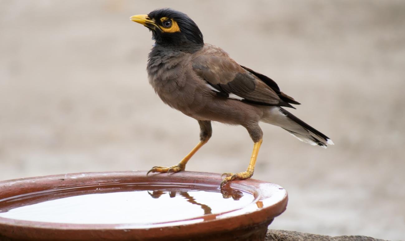 ताकि बुझ सके पक्षियों की प्यास